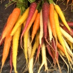 Colourful carrots at Harvest Launceston